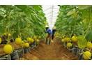 Ngành Nông nghiệp Việt Nam vắng bóng các doanh nghiệp đầu tư