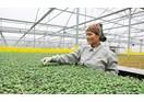 Thiếu nhân lực - khó khăn của doanh nghiệp nông nghiệp công nghệ cao